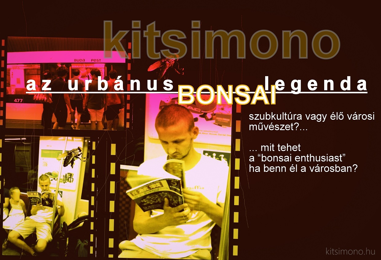 kitsimono bonsai city urban bonsaj art