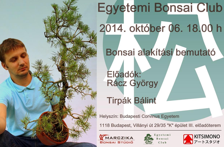 pinus sylvestris erdei fenyo bonsai alakitasa az egyetemi bonsai clubban kitsimono demo