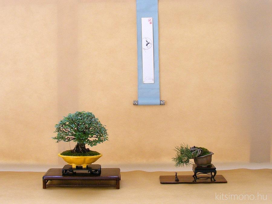 european bonsai association exhibition shohin display kitsimono